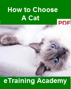 How to Choose A Cat